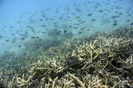 """In this Nov. 25, 2016, photo, fish swim along the edges of a coral reef off Great Keppel Island in Australia. The government agency that manages Australia's Great Barrier Reef on Friday, Aug. 30, 2019, downgraded its outlook for the corals' condition from """"poor"""" to """"very poor"""" due to warming oceans. (Dan Peled/AAP Image via AP)"""