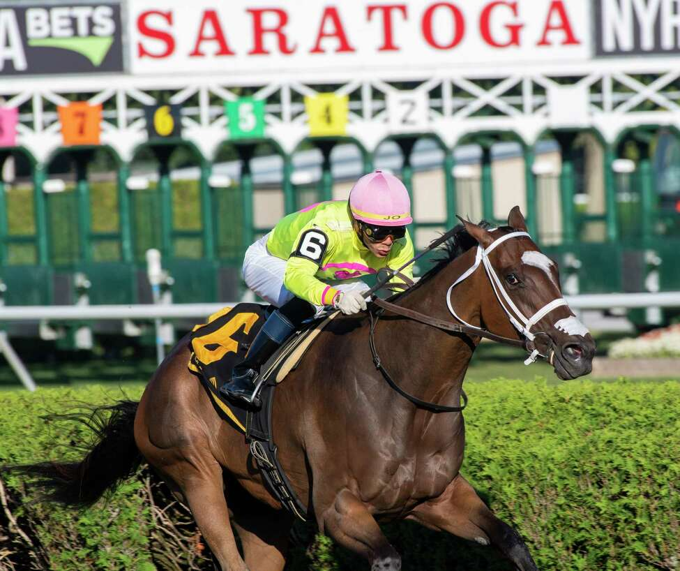 Shekky Shebaz with jockey Jose Ortiz goes wire to wire to win the 7th running of The Lucky Coin Stake at the Saratoga Race Course Friday August 30, 2019 in Saratoga Springs, N.Y. Photo Special to the Times Union by Skip Dickstein
