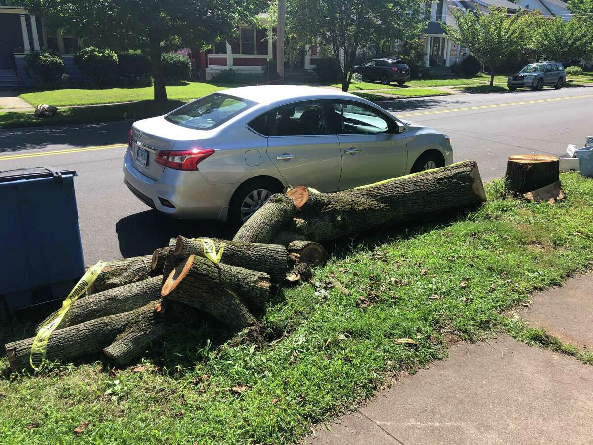 The remains of a dead ash tree taken down in front of a property on Central Avenue in New Haven, photographed on Aug. 29, 2019.