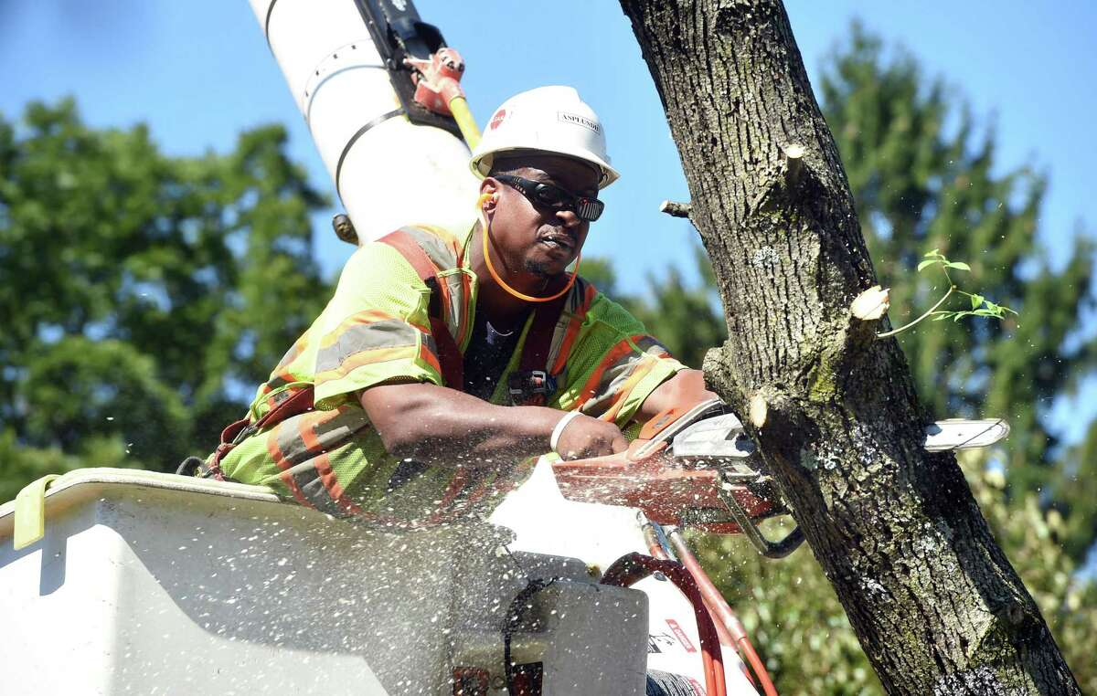 Keith Nelson of the Asplundh Tree Expert Co. cuts down an ash tree the is infested by the emerald ash borer at Yale and Central avenues in New Haven on Aug. 29, 2019.