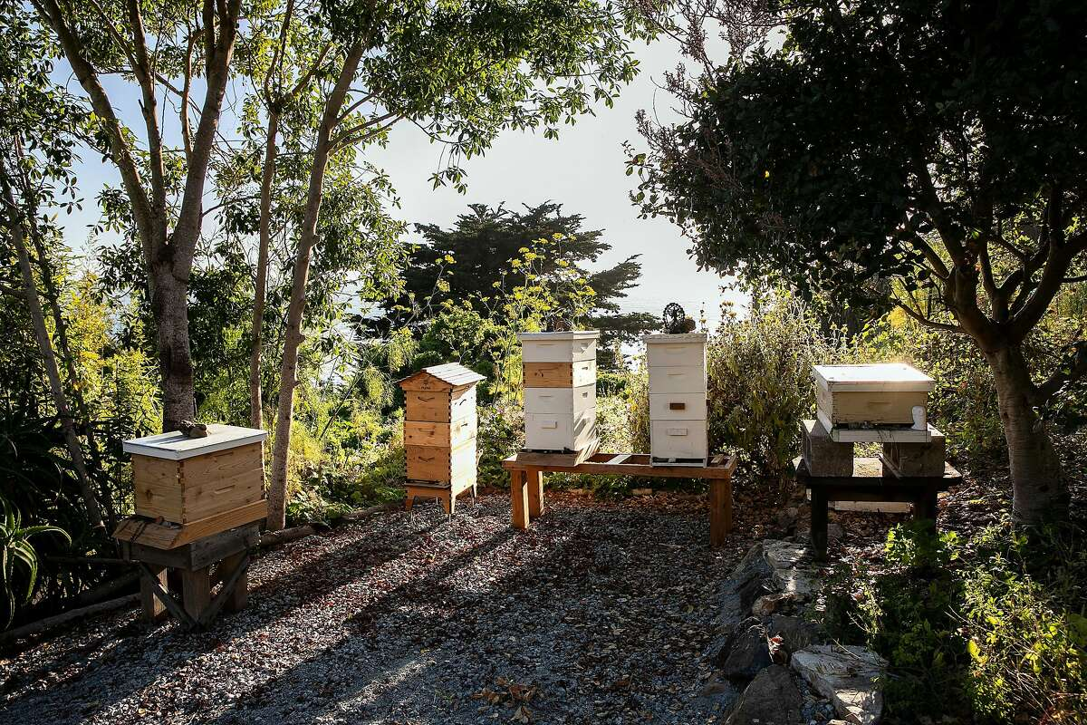 Honey Bee hives are located on the farm at Esalen on Friday, August 30, 2019 in Big Sur, Calif.