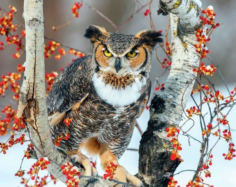Birds in Michigan focus of photography exhibit in Midland