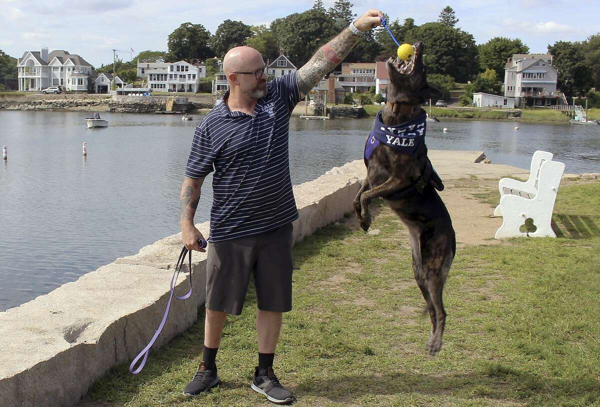 In this Tuesday, Aug. 27, 2019 photo, former U.S. Navy SEAL James Hatch plays with his service dog, Mina, near his home in Branford, Conn. The 52-year-old, who was seriously injured during a mission to find U.S. Army Sgt. Bowe Bergdahl in Afghanistan, is starting his freshman year at Yale University under a program for nontraditional students who have had their educations interrupted. (AP Photo/Pat Eaton-Robb)
