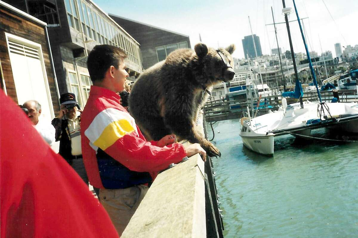 A large brown bear pictured here with his trainer visits the sea lions.