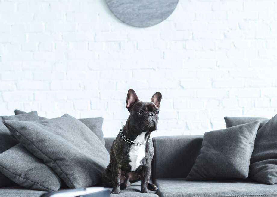 Most popular house-friendly dogs Photo: LightField Studios // Shutterstock