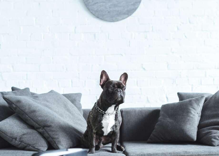 Most popular house-friendly dogs Photo: LightField Studios // Shutterstock