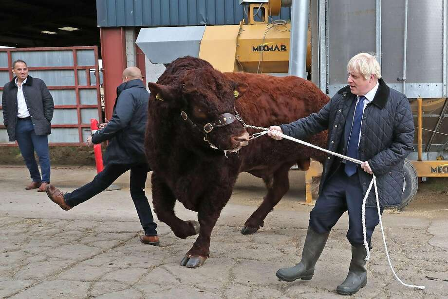 """A policeman is knocked backward as Prime Minister Boris Johnson steers a bull at a farm near Aberdeen, Scotland. Johnson says he would """"rather be dead in a ditch"""" than delay Brexit. Photo: Andrew Milligan / AFP / Getty Images"""