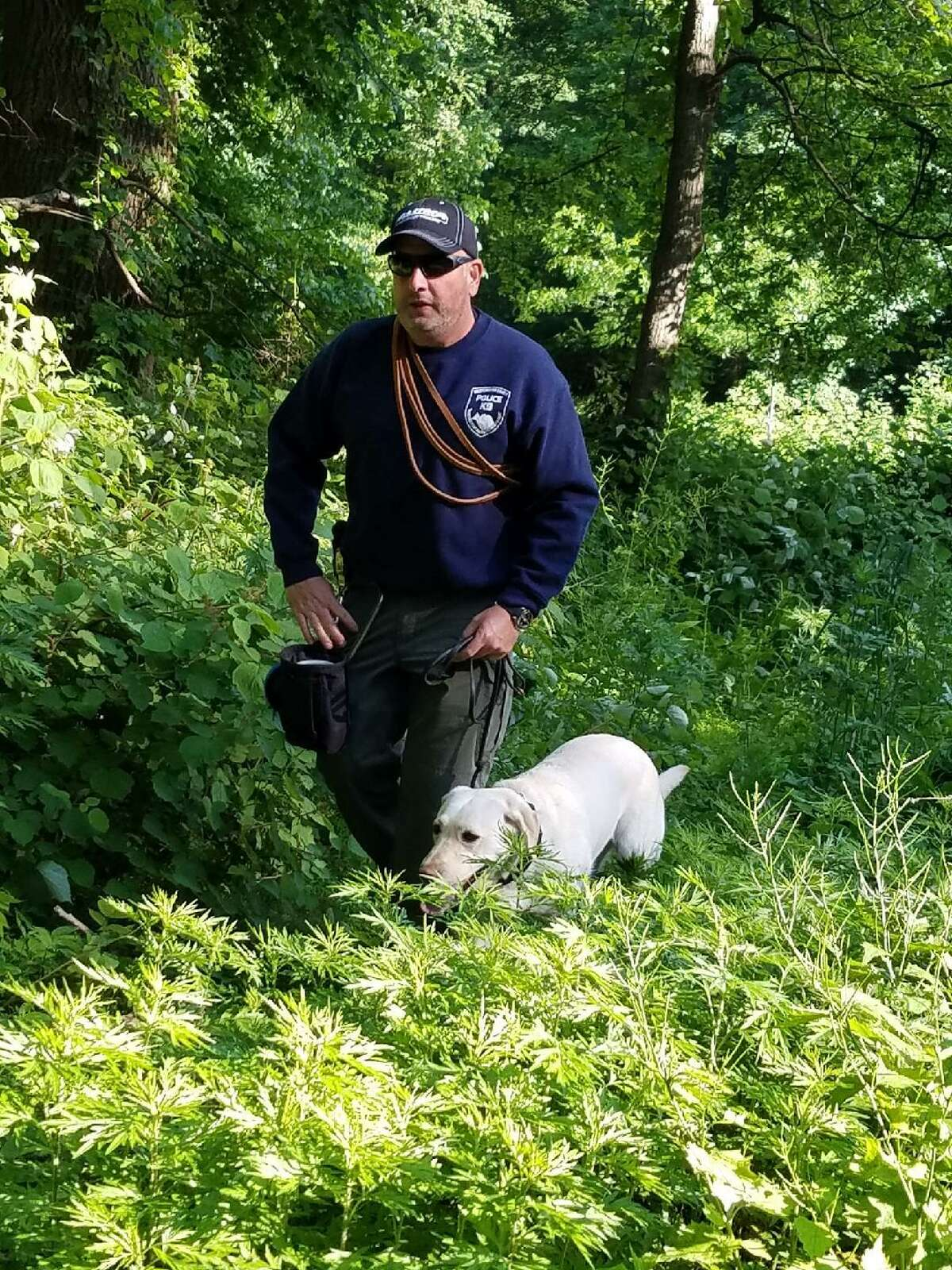 State Police with dogs trained to sniff out electronic equipment search Waveny Park in New Canaan for a cell phone as part of the investigation into the disappearance of Jennifer Dulos on Monday, June 3.