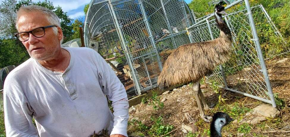 Peter Dubacher, founder and director of the Berkshire Bird Paradise, with an emu at the sanctuary in Grafton, N.Y. (Chris Churchill / Times Union)