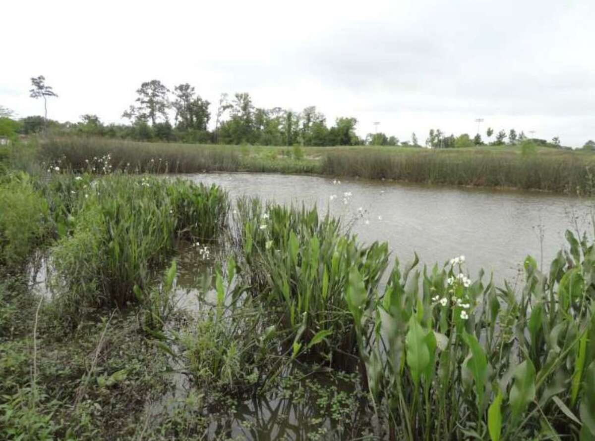The Bretshire Detention Basin within Greens Bayou Watershed had wetland vegetation installed. During heavy rainfall, water from Halls Bayou is detained in the basin.