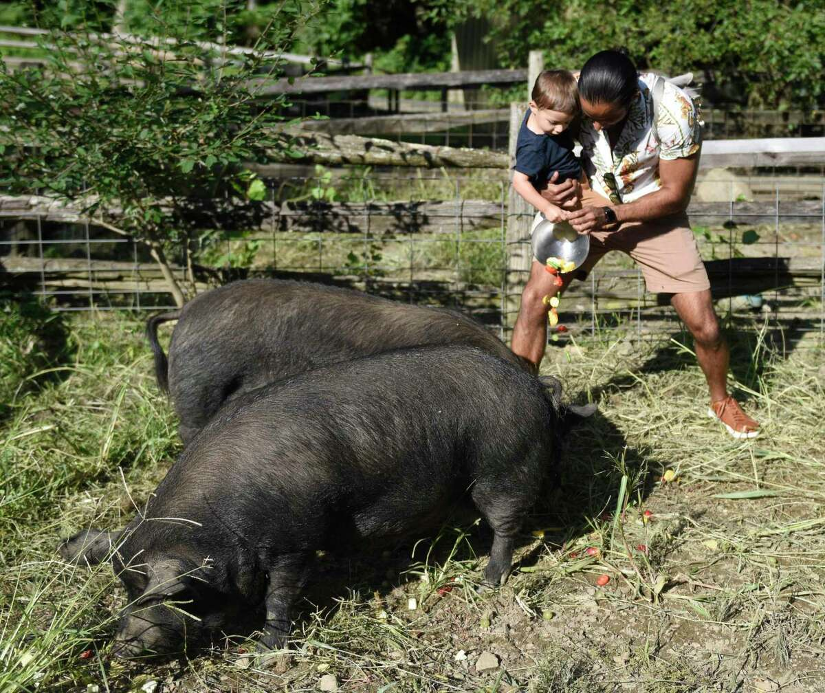 Greenwich's Sid A. and his son Taj, 2, feed guinea hogs at the Meet the Pigs event at the Stamford Museum & Nature Center in Stamford, Conn. Sunday, Sept. 8, 2019. Attendees learned about guinea pigs and guinea hogs and then got a chance to feed the excited hogs their dinner out in the pen.
