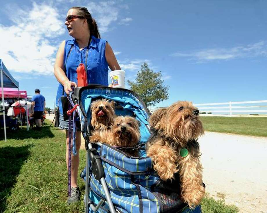 Julie Marshall of Cottage Hills wheels her Yorkshire Terriers (left to right) Dobbie, 11, Quinn, 7, and Molly, 14, around in a stroller Saturday during Metro East Humane Society's Woofstock presented by Carol House Furniture. Proceeds from the event benefit the homeless animals the society saves.  Photo: Thomas Turney | For The Intelligencer