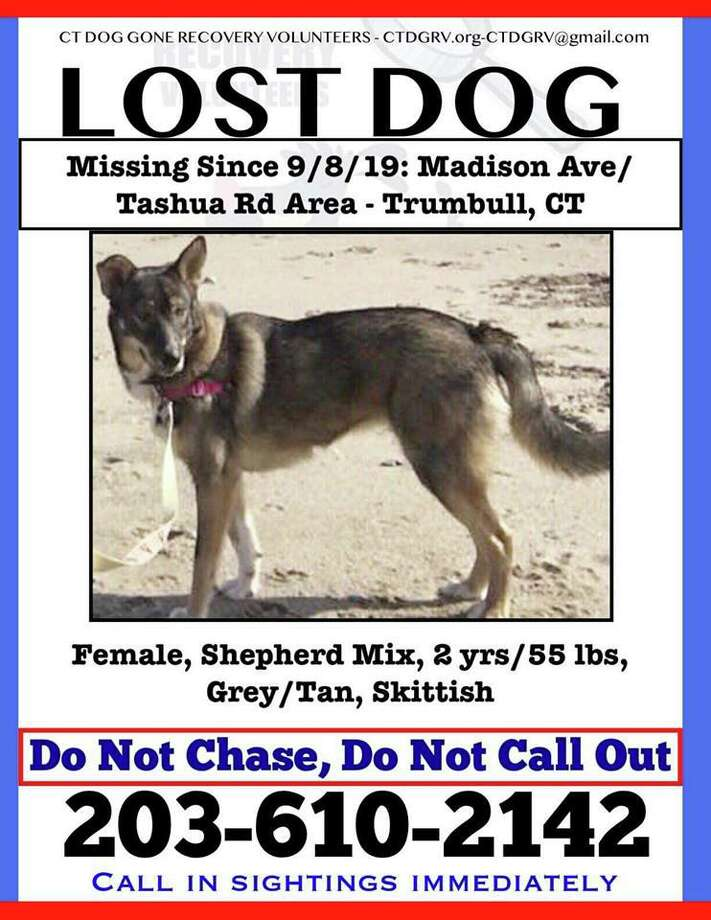A 55-pound husky mix has been reported missing from the Tashua Knolls area. Photo: /