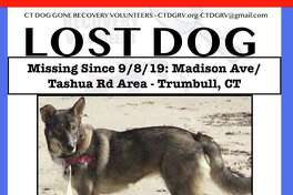 A 55-pound husky mix has been reported missing from the Tashua Knolls area.