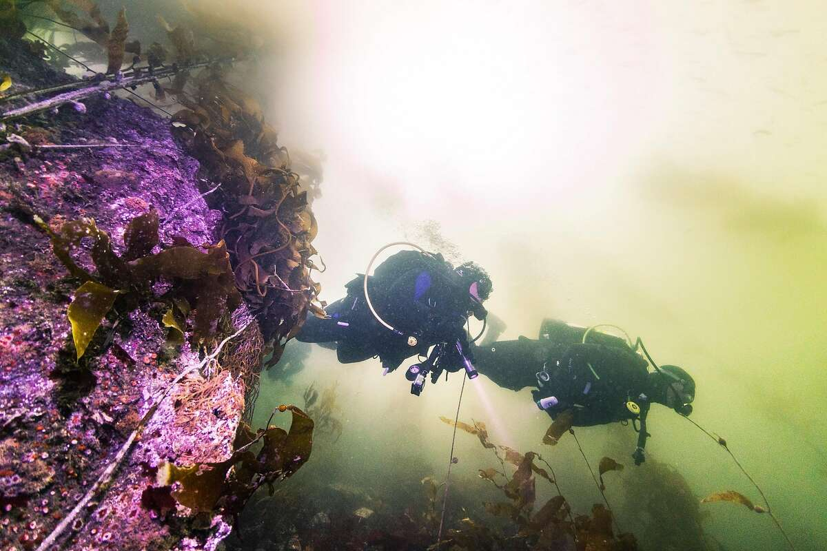 Divers explore the water off of San Carlos Beach on Saturday, Sept. 7 in Monterey, Calif.