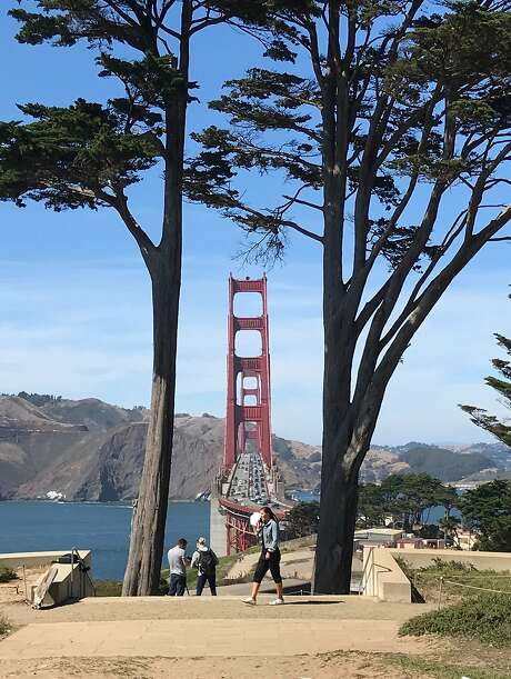 Golden Gate Overlook in the Presidio has a view of both Golden Gate Bridge spans between two cypress trees. Photo: Peter Hartlaub / The Chronicle