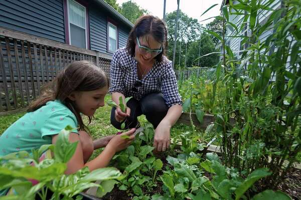 Catherine McDonnell-Forney and her daughter Madeline, 9, harvest some radishes and lettuce from one of their gardens on June 25, 2019 in Minneapolis, Minn. (Brian Peterson/Minneapolis Star Tribune/TNS)