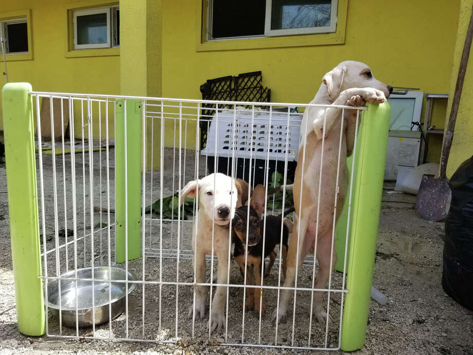 The Humane Society of Grand Bahama lost many of its animals to flooding during Hurricane Dorian. Photo: Handout Courtesy Of The Humane Society Of Grand Bahama / Handout