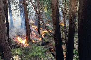 U.S. Forest Service crews are conducting controlled burns to reduce fuels in the Rosasco Meadow area of the Stanislaus National Forest west of Yosemite. An underground fire has been burning in the area for at least five years.