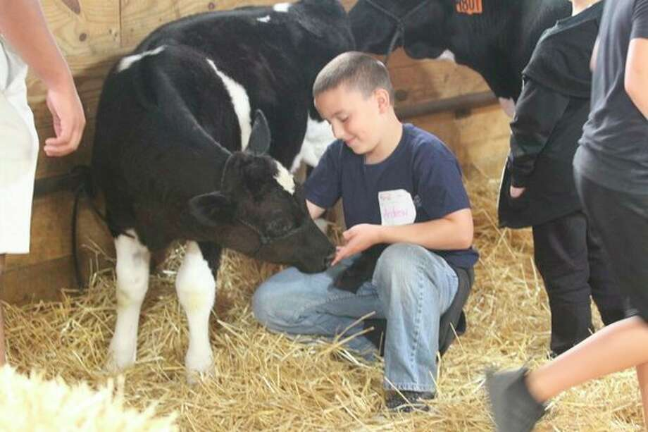 A calf sniffs the hand of a local student at the annual Rural Education Day at the Huron Community Fairgrounds Tuesday. The event event serves as an opportunity for students to learn about the many natural resources found in the Thumb. For more photos from the event, see Page 8A.(Eric Rutter/Huron Daily Tribune)