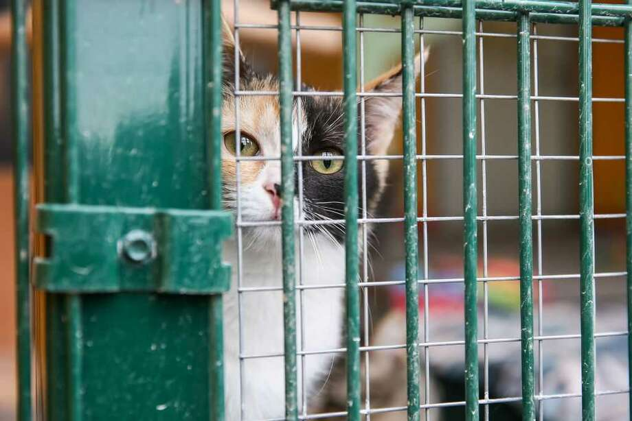 Michigan animal shelters become part of 'no kill