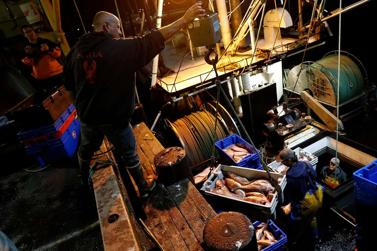 Steve Fitz unloads a catch of groundfish from his boat, Mr. Morgan, at Morning Star Fisheries in Half Moon Bay, Calif., in the early morning hours of Wednesday, September 4, 2019.