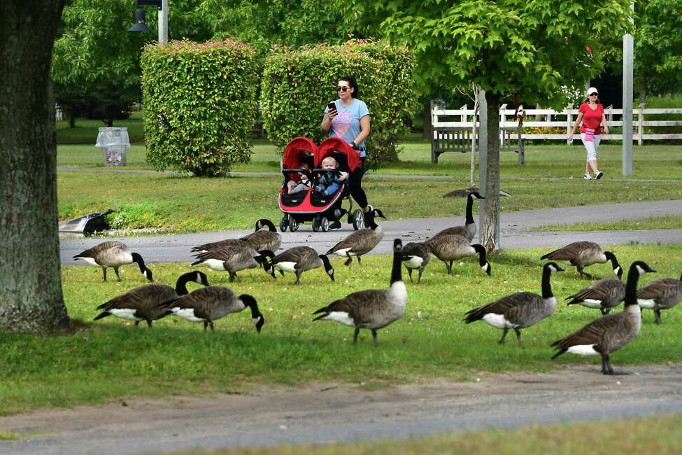 People and geese enjoy a beautiful day at The Crossings of Colonie on Wednesday, Sept. 11, 2019 in Colonie, N.Y. (Lori Van Buren/Times Union)