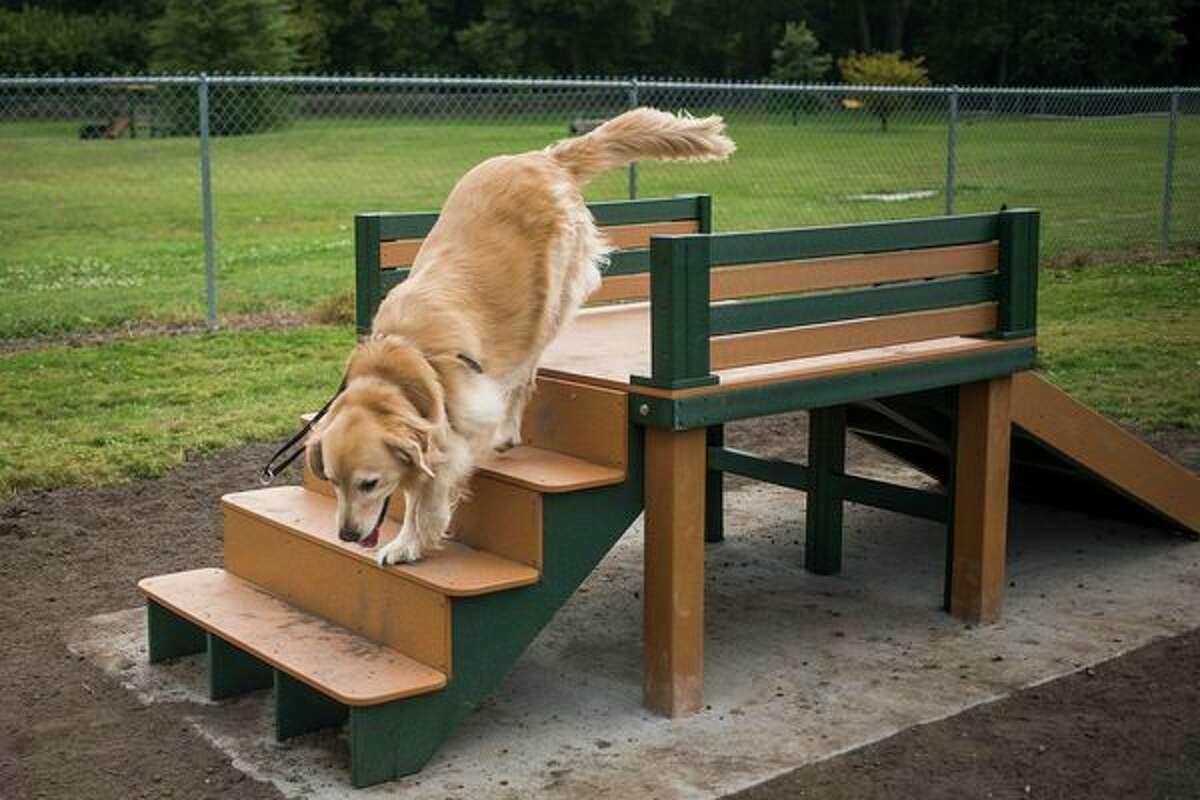 A dog runs on a new piece of equipment at the Midland Dog Park Monday in Midland. (Katy Kildee/kkildee@mdn.net)
