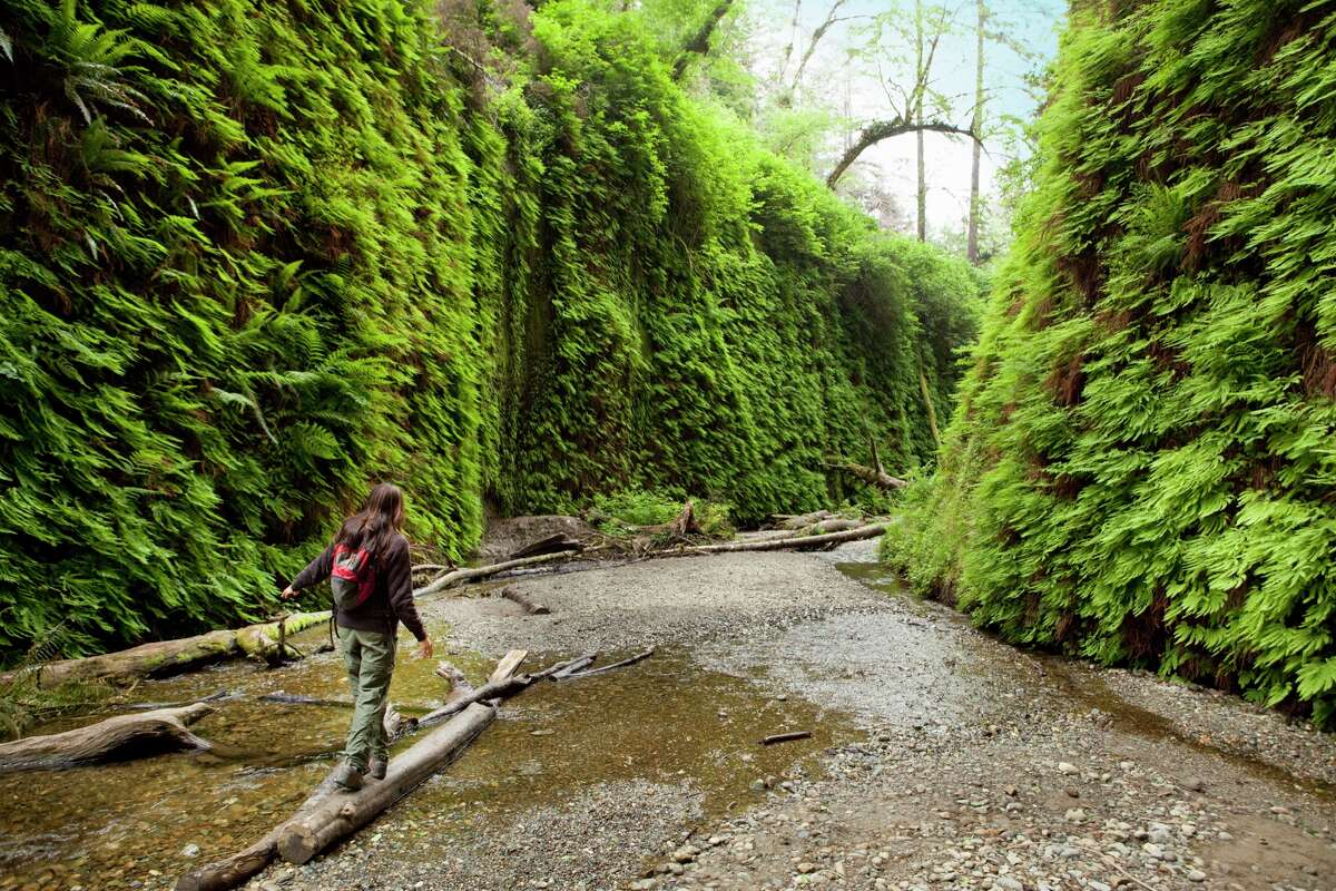 Fern Canyon: Steven Spielberg was so inspired by the frond tapestries of Fern Canyon in Prairie Creek Redwood State Park that he used it for a scene in
