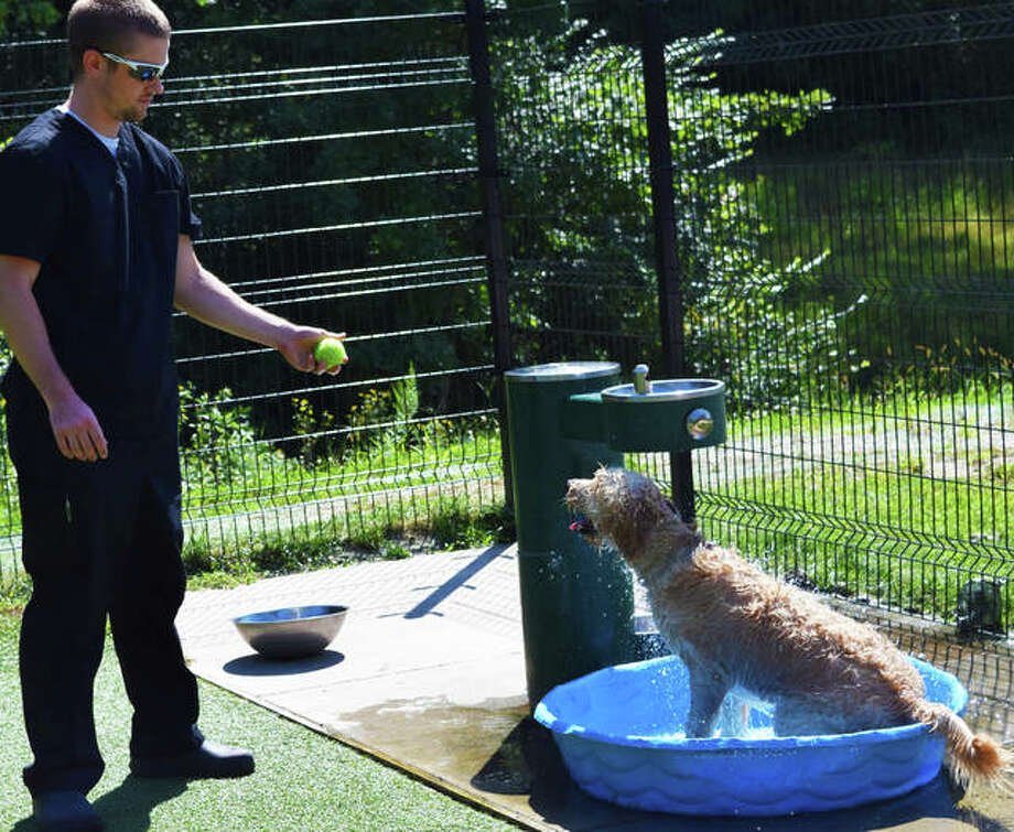 Edwardsville native Matt Huelsmann lets his 8-month-old dog, Georgia, cool off in a kiddie pool at the newly named Brent Leh Memorial Dog Park. Photo: Tyler Pletsch | Intelligencer