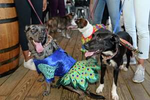 Rescue dogs wear opera costumes as Houston Grand Opera's Opening Night for Young Professionals partners with the Houston SPCA for a happy hour at Bungalow Heights in Houston, TX on Tuesday, September 10, 2019.