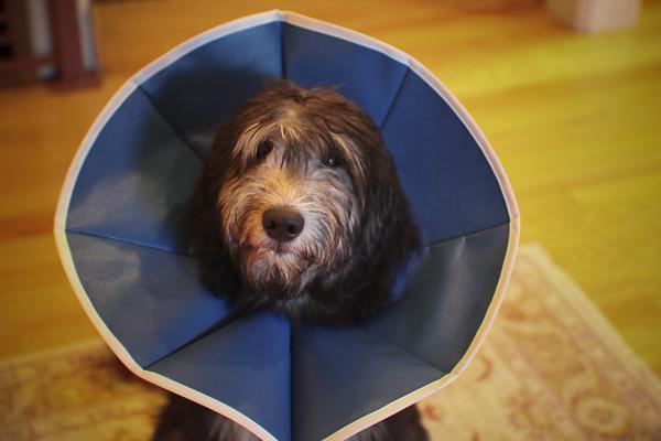 PET TALK: Recognizing a pet emergency