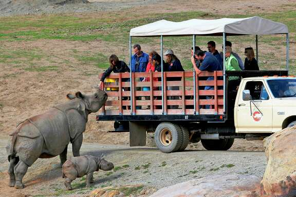 A caravan through the 1,800-acre San Diego Zoo Safari Park, during which she got to feed and pet a mother and baby black rhino, was a highlight of reporter Maggie Gordon's recent trip.
