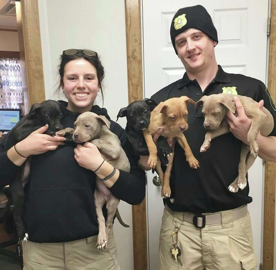 Although the Tuscola County Animal Shelter has only been operational under local control for a year, things are going well. Shelter Director Leigh Nacy, at left, and shelter worker Tyler Ray, at right, show some of the puppies at the shelter. (Mary Drier/For the Tribune)