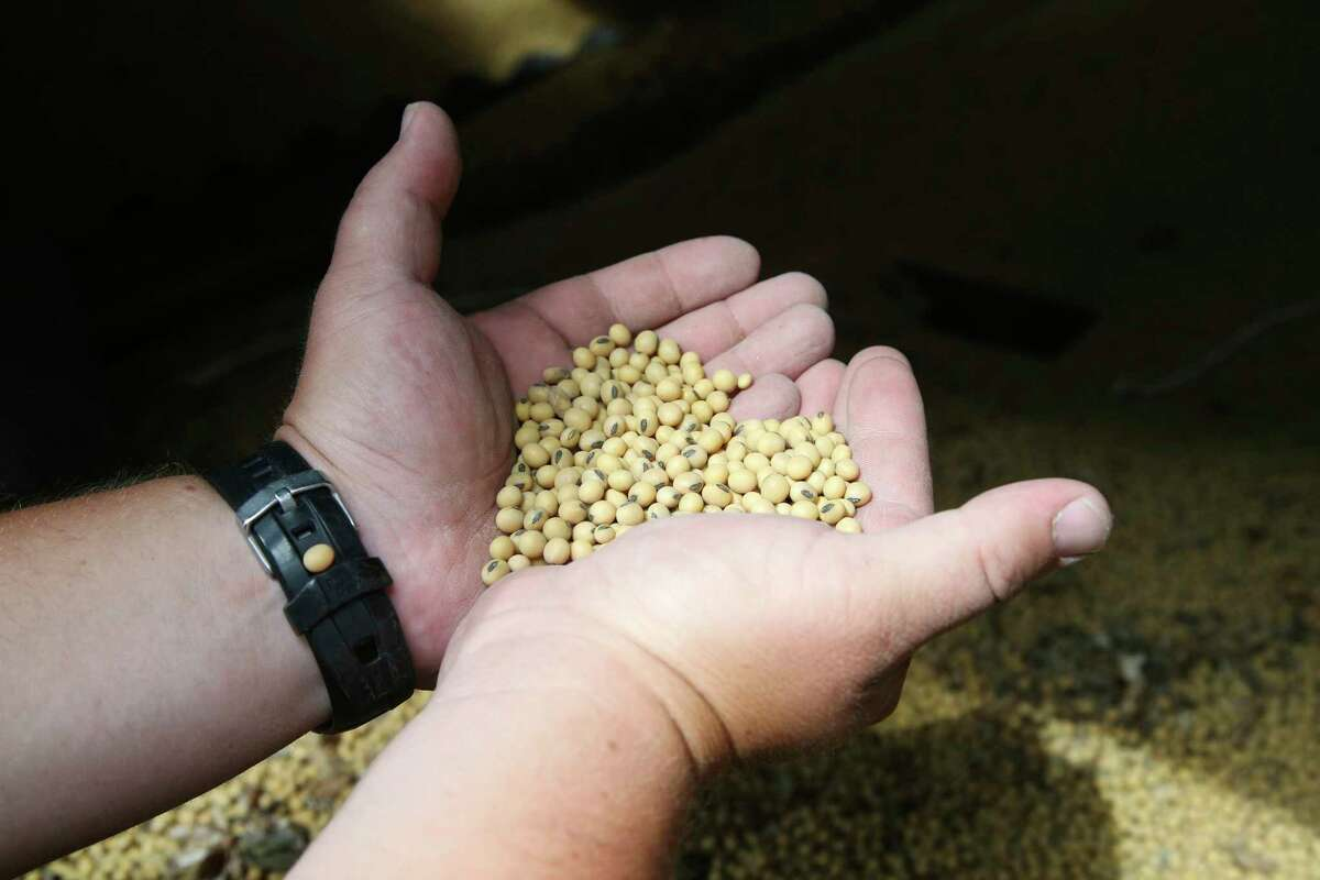 FILE - In this July 18, 2018, photo, soybean farmer Michael Petefish holds soybeans from last season's crop at his farm near Claremont in southern Minnesota. China's government says its importers are inquiring about prices for American soybeans and pork in a possible goodwill gesture ahead of talks aimed at ending a tariff war with Washington. (AP Photo/Jim Mone)