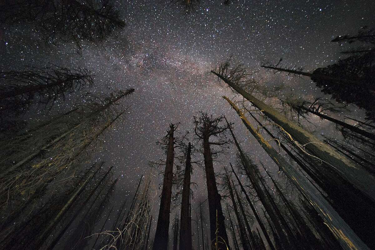 Three dead giant sequoias damaged in the Pier Fire of 2017, lower middle, remain standing in a small grove with the Milky Way visible above in the Sequoia National Forest near Springville, Calif., on Monday, August 26, 2019. Save the Redwoods League researchers are finding that the once-resilient giant sequoias, which are known to live as long as 3,000 years, are succumbing to climate-driven wildfires at numbers greater than previously seen.