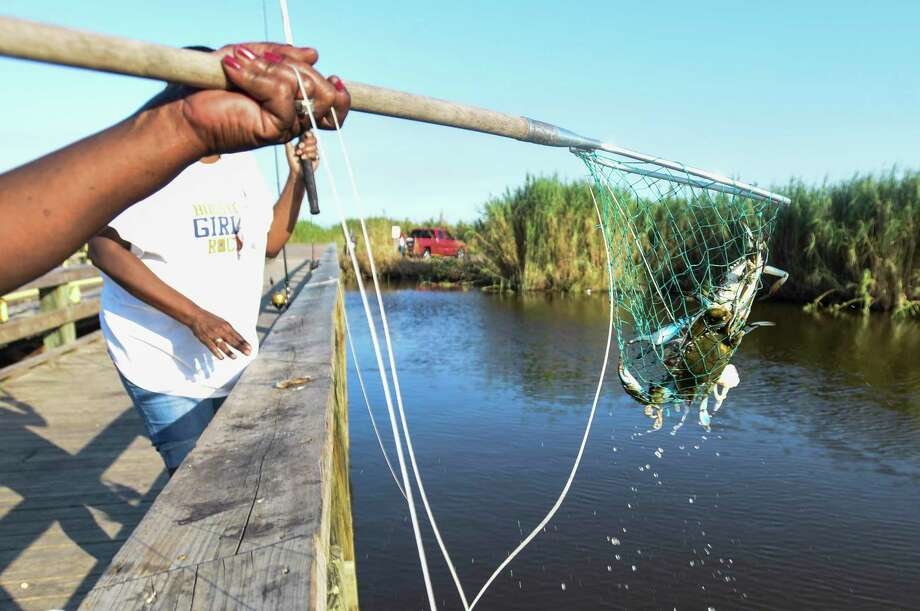 Fara Walden hoists a net with two crabs in it from the water after catching them at McFaddin National Wildlife Refuge Thursday afternoon. Photo taken on Thursday, 09/12/19. Ryan Welch/The Enterprise Photo: Ryan Welch, Beaumont Enterprise / The Enterprise / © 2019 Beaumont Enterprise
