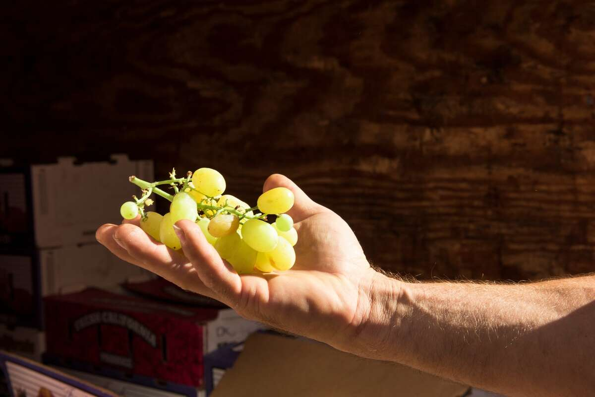 We learn from Konstantin that the sweetest and ripest grapes are often non-uniform.