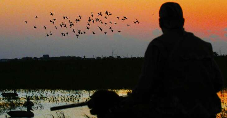 A flock of blue-winged teal swings toward waterfowlers decoys on a Texas coastal wetland. The state's 16-day teal hunting season opens Saturday.