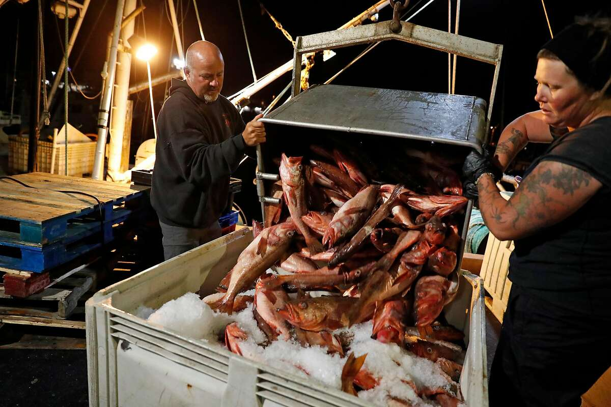 Steve Fitz and Amanda Burton unload Bocaccio at Morning Star Fisheries in Half Moon Bay, Calif., in the early morning hours of Wednesday, September 4, 2019.