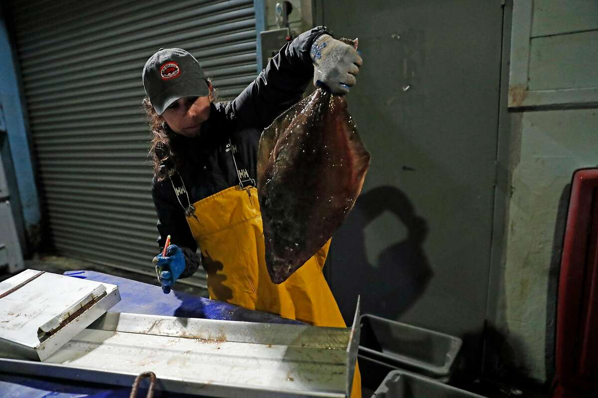 Gabby Reta measures Petrale Sole after it was unloaded from Steve Fitz' fishing boat at Morning Star Fisheries in Half Moon Bay, Calif., in the early morning hours of Wednesday, September 4, 2019.