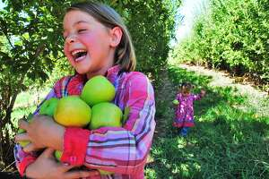Charlee Beth Hollon, 6, of Camino cracks up as she struggles to hold an armful of apples at the orchard called Kids Inc. In the background is her sister, Tennessee, 2.