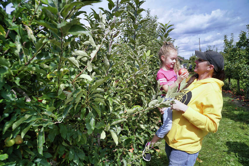 Reese Lipscomb, 4, of Guilderland gets a lift from her mom, Amanda Lipscomb, to reach apples in a tree at Indian Ladder Farms on Sunday, Sept. 15, 2019, in Altamont, N.Y. (Paul Buckowski/Times Union)