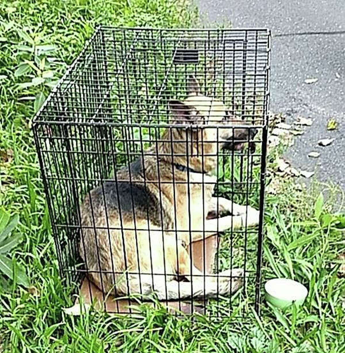 Police are looking for the person who left an adult male German shepherd in a crate down an embankment over the weekend. The dog was found suffering from dehydration but appears to be otherwise healthy, police said.