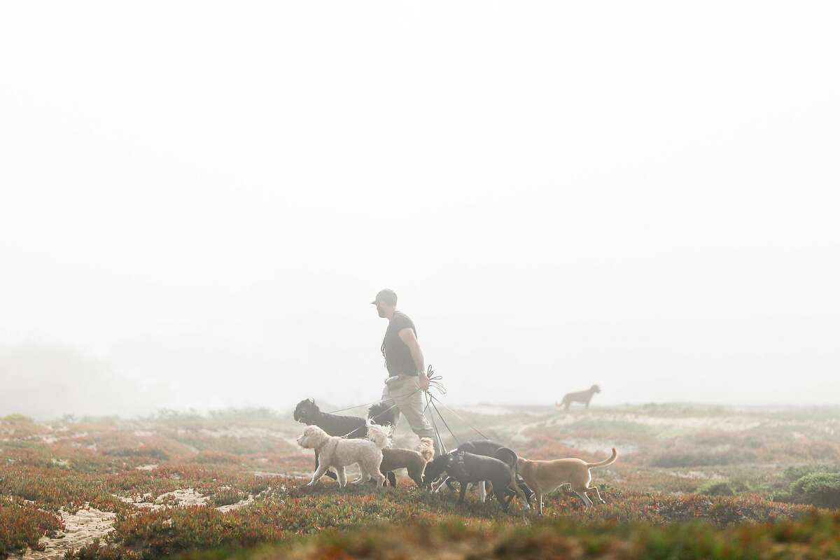 A man walks dogs through the thick fog and mist at Fort Funston in San Francisco, California, on Monday, Sept. 16, 2019.