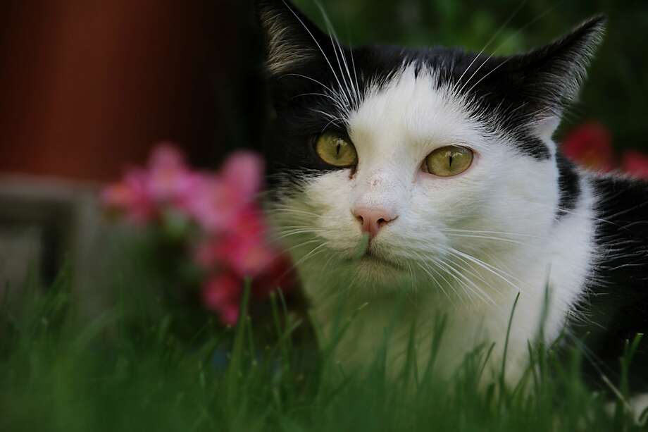 Cats can sometimes treat a garden as a litter box. Photo: WikiCommons