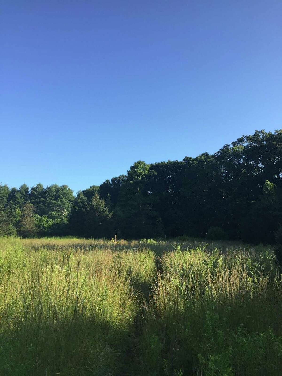 A dew-soaked meadow in Easton accessible through the Aspetuck Valley Trail.