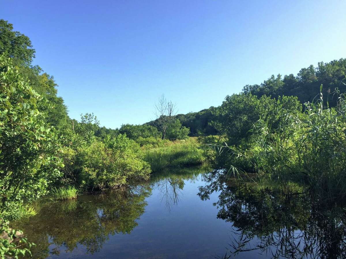 A swampy section of the Aspetuck River, seen along the Aspetuck Valley Trail.