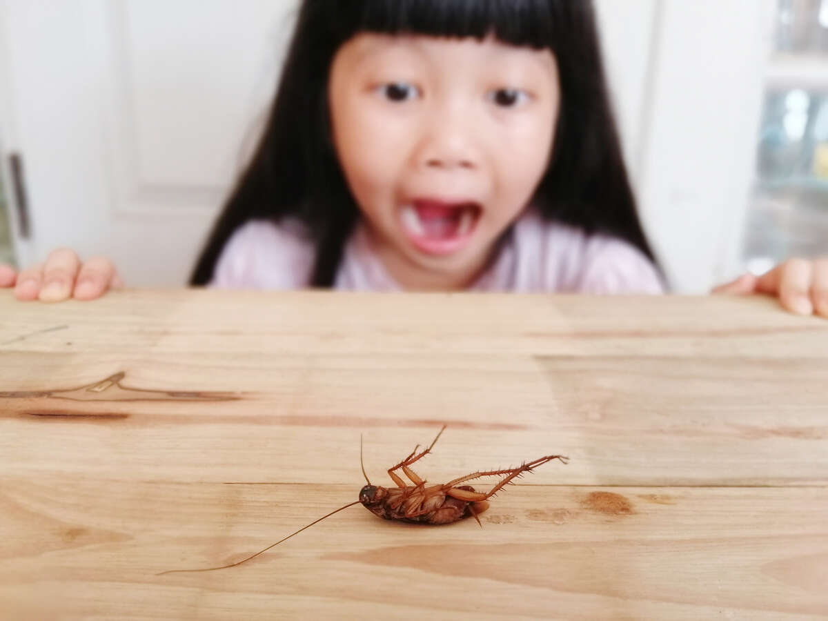 No need to panic. There are things you can do to battle roaches safely and effectively.