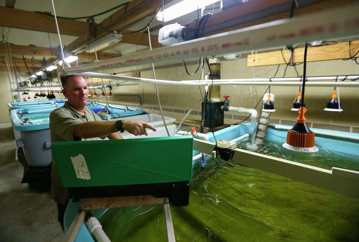 Climate controlled research tanks are monitored at The University of Texas Marine Science Institute Fisheries and Mariculture Lab, in Port Aransas. The campus was devastated by Hurricane Harvey.